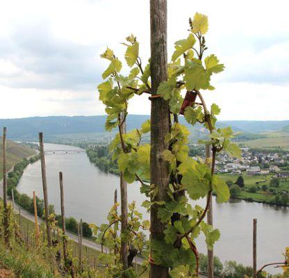 Rheinland-Pfalz © Leo_65